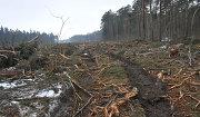 Место вырубки в Цаговском лесу для строительства новой трассы.